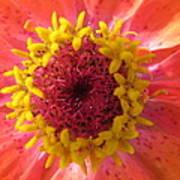 Last Orange Bloom Art Print