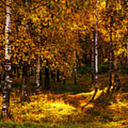 Last Song Of The Autumn 1 Art Print