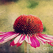 Last Summer Feeling Art Print by Angela Doelling AD DESIGN Photo and PhotoArt