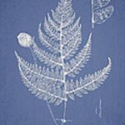 Lastrea Pulvinulifera Art Print by Aged Pixel