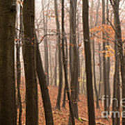Late Autumn Beech Art Print