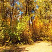Late Autumn Colours Art Print
