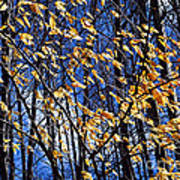 Late Fall Art Print