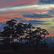 Late Sunset Trees In The Mist Art Print