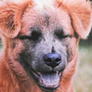Laughing Dog Art Print