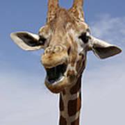 Laughing Giraffe Art Print