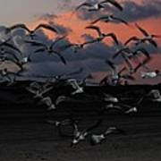 Laughing Gull Twilight Art Print