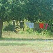 Laundry Hanging From The Tree Art Print