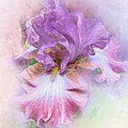 Lavendar Dreams Art Print
