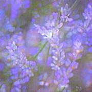 Lavender 5 Art Print