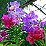 Lavender And Red Orchids At Maerim Orchid Farm In Chiang Mai-tha Art Print