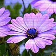 Lavender Beauties Art Print