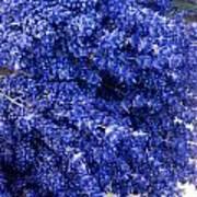 Lavender Bunch Flowers Art Print