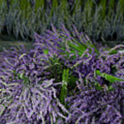 Lavender Bundles Art Print