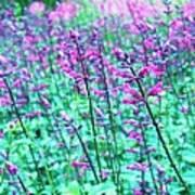 Lavender Color Flowers Art Print