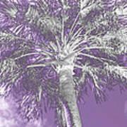 Lavender Glow Palm Tree Myakka River State Park Usa Art Print