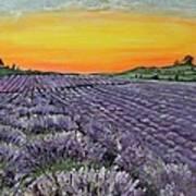 Lavender Oasis Art Print