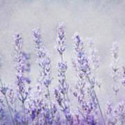 Lavender Romance Art Print