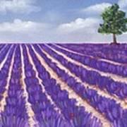 Lavender Season Art Print