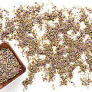 Lavender Seeds Art Print