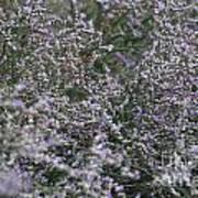 Lavender Silver Lining Art Print