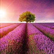 Lavender Sunrise Art Print