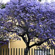 Lavender Tree Art Print