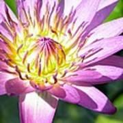 Lavillita Flower 10117 Art Print