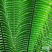 Layered Ferns I Art Print