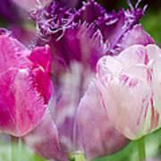 Layers Of Tulips II Art Print