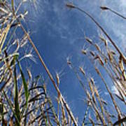 Laying In A Feild Looking Up Art Print