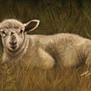 Lazy Lamb Art Print