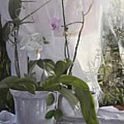 Le Orchidee Sfumate Art Print