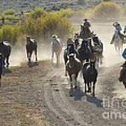 Leading Horses To Pasture Art Print