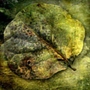 Leaf #1 Art Print