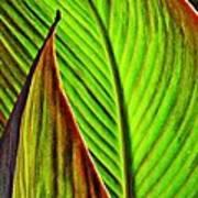 Leaf Abstract 4 Art Print
