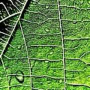 Leaf Abstract - Macro Photography Art Print