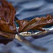 Leaf Afloat Art Print by Nancy Edwards