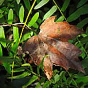 Leaf Among Ferns Art Print