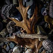 Leaf And Stones Art Print