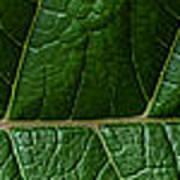 Leaf Close Up Art Print