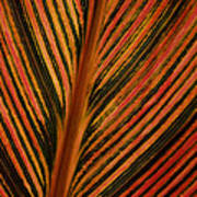 Cannas Plant Leaf Closeup Art Print