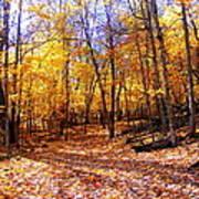 Leaf Covered Trail Art Print
