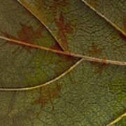 Leaf Design I Art Print