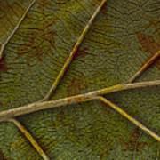 Leaf Design II Art Print