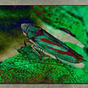 Leaf Hopper Art Print