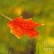 Leaf In Rain Art Print