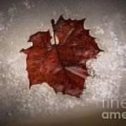 Leaf In Snow Art Print