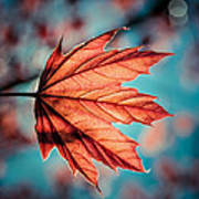 Leaf Of Light Art Print