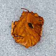 Leaf On Granite 11 - Square Art Print